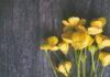 Żółty szary